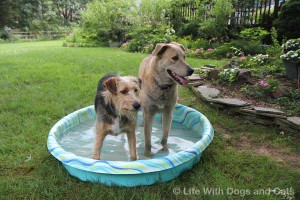 Tucker and Jasper in pool