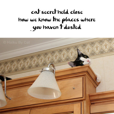 cat secret held close / how we know the places where /  you haven't dusted