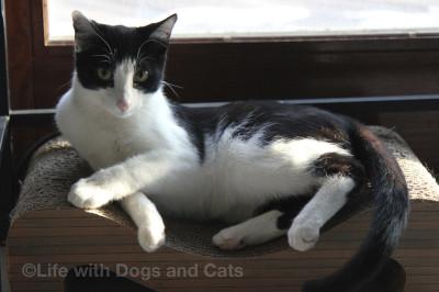 Calvin, Stupendous Cat