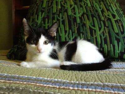 Adorable as a kitten...