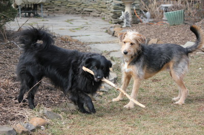 Lilah would love for Tucker to just try and take that stick.