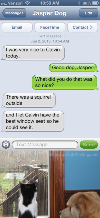 Text from Dog: I was nice to the cat; I gave him the window seat so he could watch squirrels.