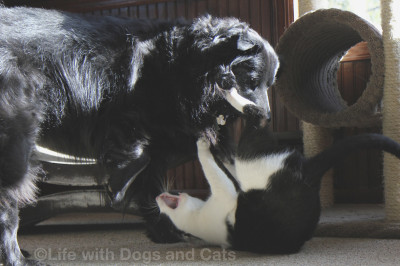 Lilah thinks Calvin is okay to play with, but would appreciate less sharp and pointy bits.