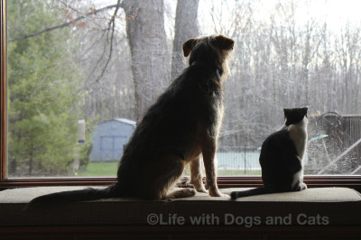 Tucker and Calvin share a common interest: birdwatching